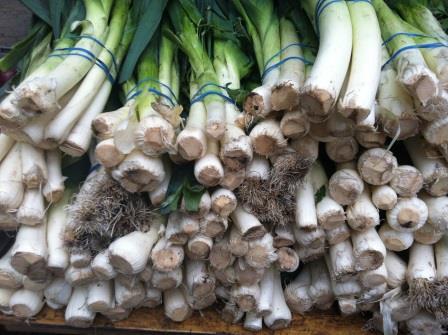 onionscompressed